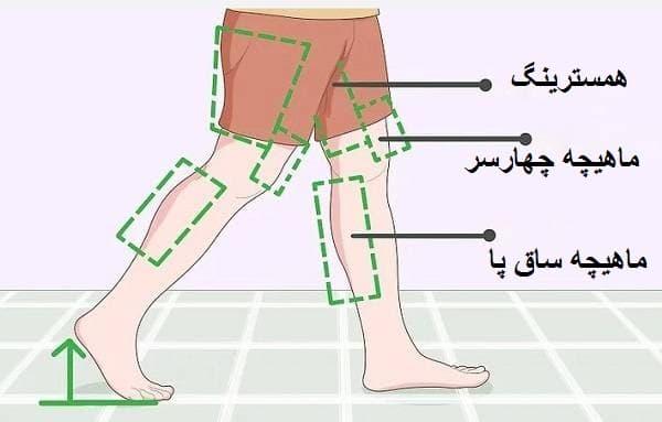 برای راه رفتن موثر از ماهیچه_های ساق پا، همسترینگ و عضلات چهار سر ران استفاده کنید